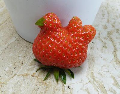 Strawberry berbentuk seperti anak ayam