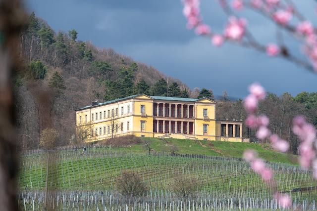 Pfälzer Mandelpfad | Etappe 05 Edenkoben – Birkweiler | Wandern Südliche Weinstraße | Mandelblüte Pfalz 06