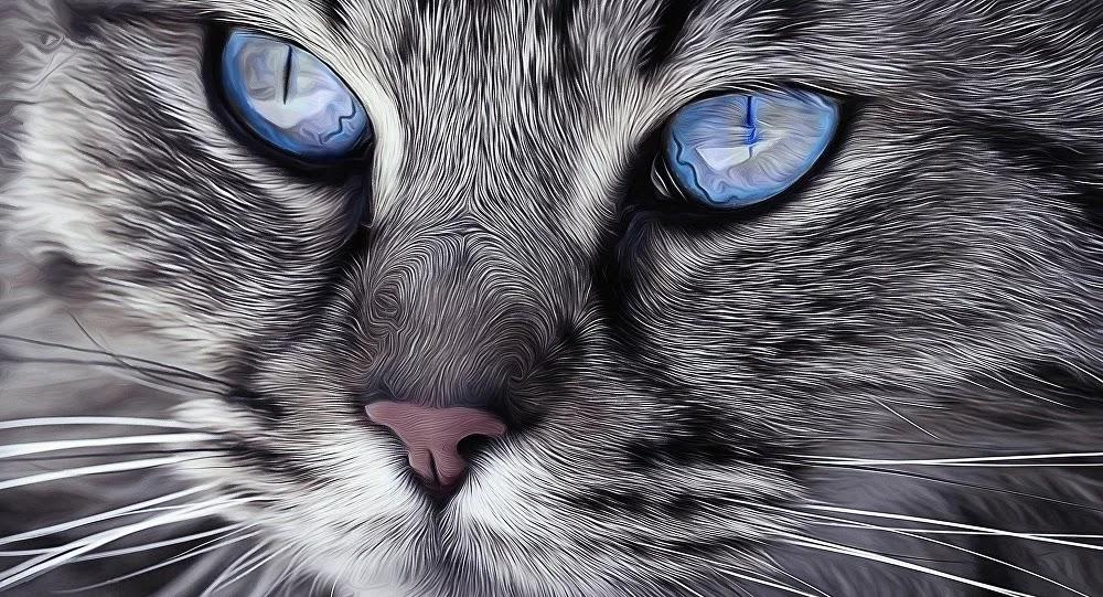 SCI-TECH : Votre chat cligne lentement des yeux en vous regardant? Maintenant vous comprenez son message