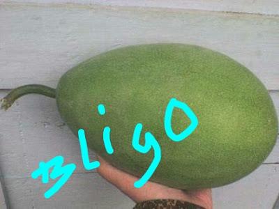 manfaat buah bligo untuk kesehatan