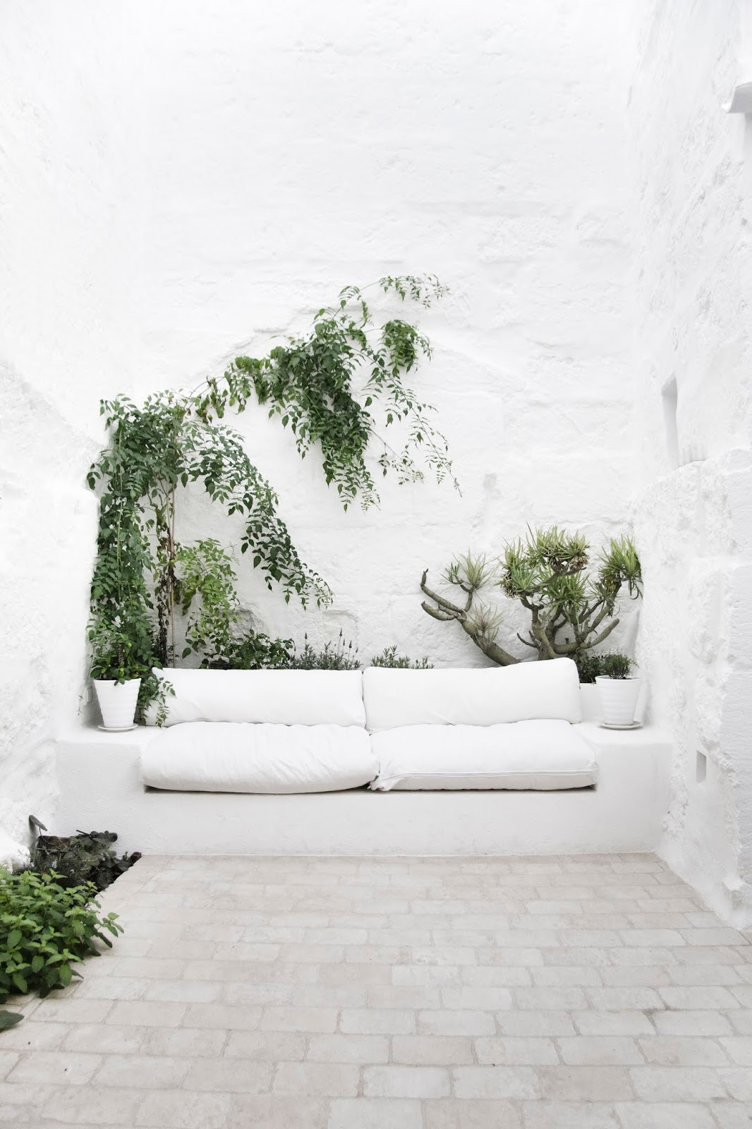 Patio blanco y muchas plantas verdes