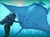 Manta, Ikan Pari Terbesar di Dunia