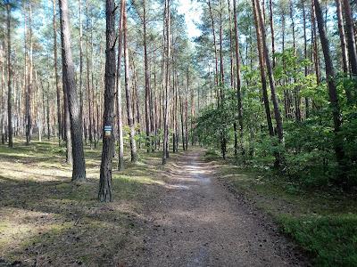 Droga przez las ku polanie turystycznej