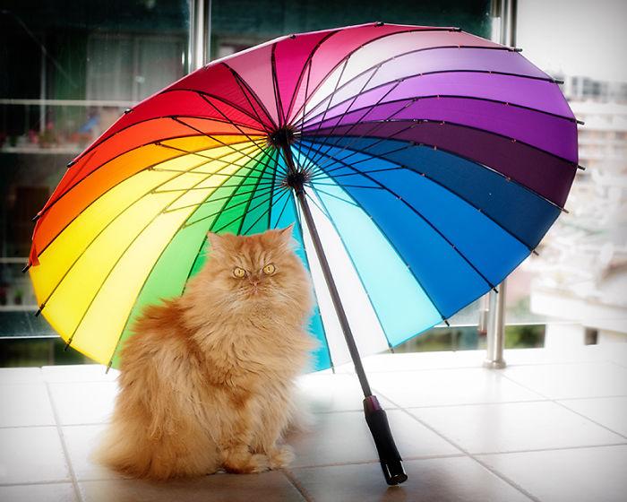 garfi-evil-grumpy-persian-cat-5