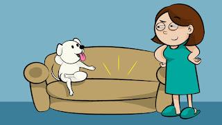 cães subindo no sofá