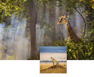 sfondo Safari
