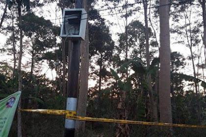 'Tersangka' Penyebab Listrik Padam, Pohon Sengon di Gunungpati Dipasangi Garis Polisi