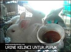 Urine kelinci (Manfaat dan Kandunganya)