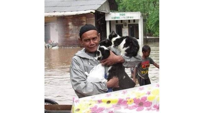 Banjir Jakarta: Kucing juga diselamatkan