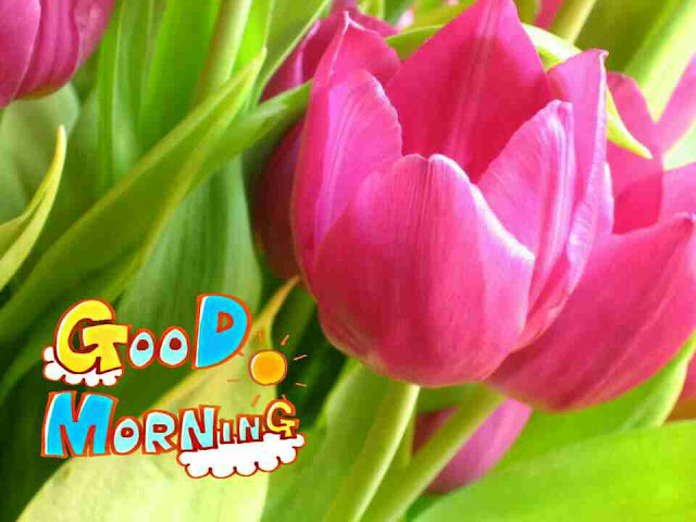 Awesome good morning image with pink flower