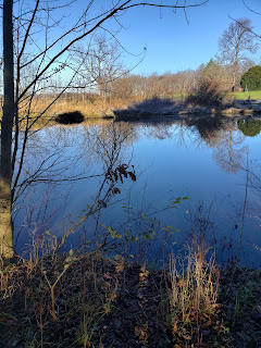 pond and blue sky