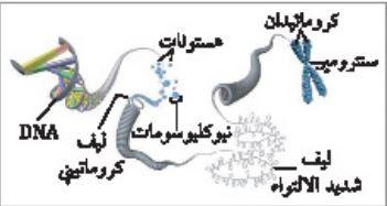 ملخص درس المادة الوراثية ، DNA - الوراثة الجزيئية