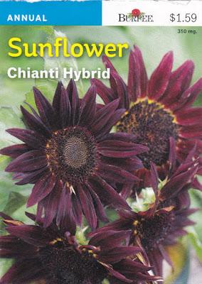 Chianti Hybrid Sunflower Seeds from Burpee