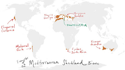 A map of the world showing the locations of some Mediterranean shrublands.