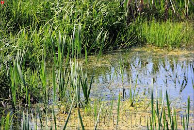 Лягушки в пруду рядом с костелом