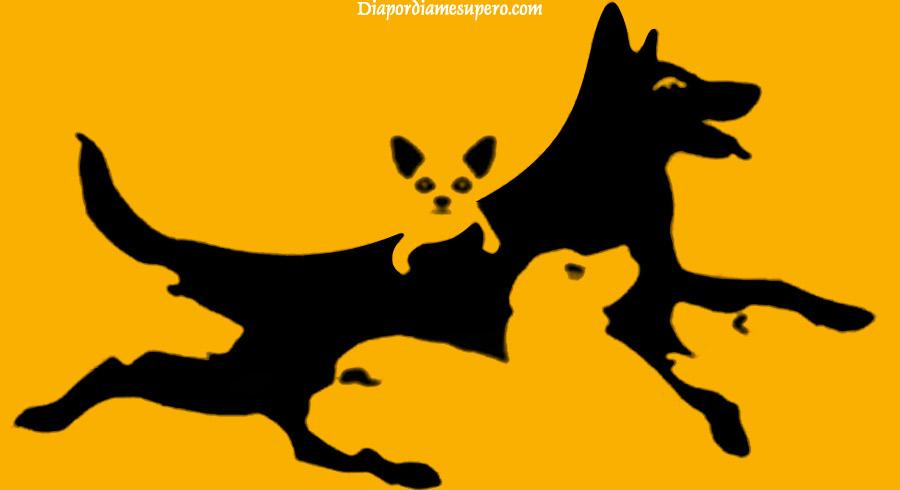 Test: ¿Cuántos perros hay? Tu respuesta determinará tu edad mental