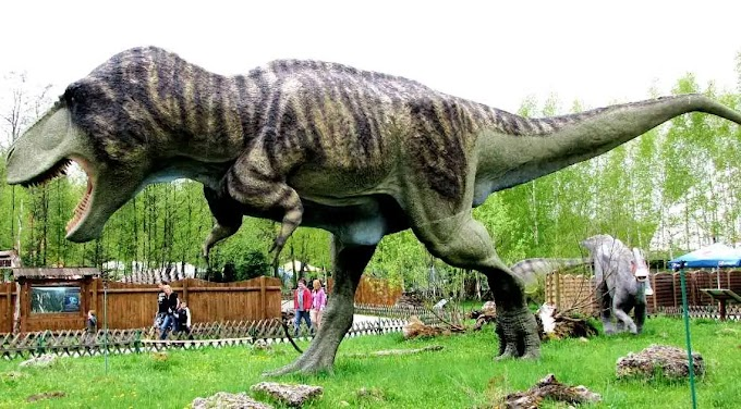 New Tyrannosaurus rex study shows 20k lived at any one time, or 2.5 billion in total