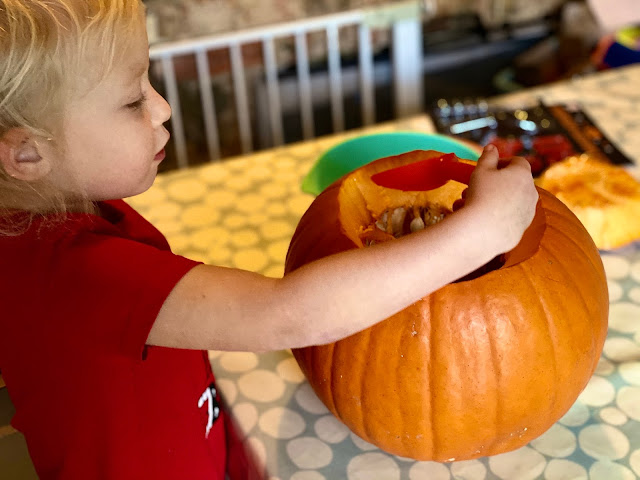 A 3 year old using an orange scoop to remove the pumpkins seeds from a pumpkin