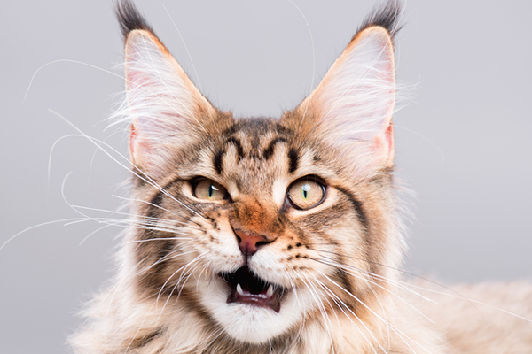 Top 20 Cat Status in English 2022