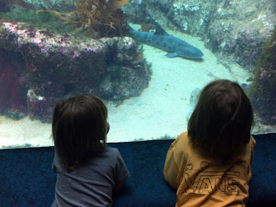 Field Trip With the Grandboys - Birch Aquarium