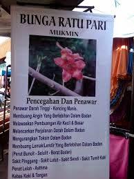 Bunga Mukmin / Ratu Pari / Gossampinus Malabarica / Mu Mian Hua