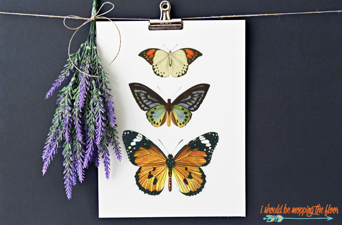 Free Butterfly Printable