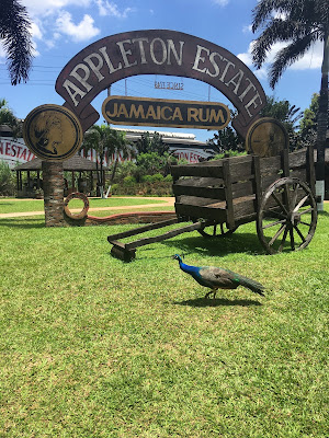 appleton estate jamaica rum sign with peacock in front of it, Chevy Takes The Mic Jamaican Travel Blog Series Adventures in St. Elizabeth