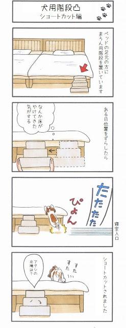 cão pulando cama alta