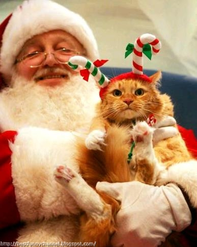 Santa and funny cat.