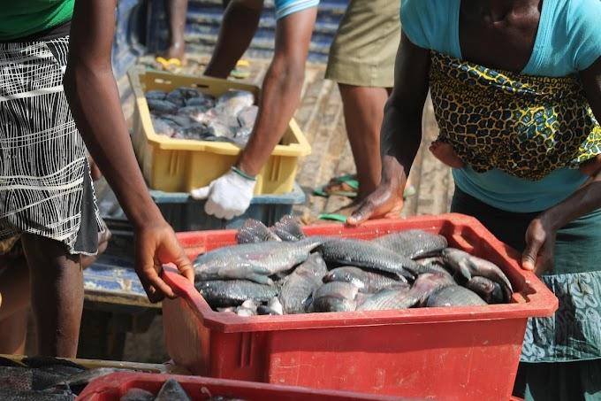 How To Start Profitable Fish Farming In Kenya