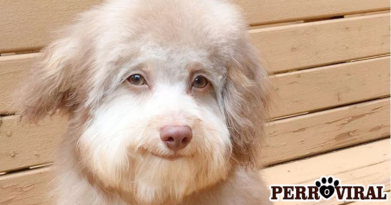 Perro con cara de humano sorprende a todos por las calles de Seattle