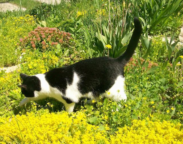 цветочно - травяное раздолье для кошки на даче