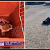 He Laid There In Misery, Bound In A Trash Bag As Cars Drove Over His Tiny Body