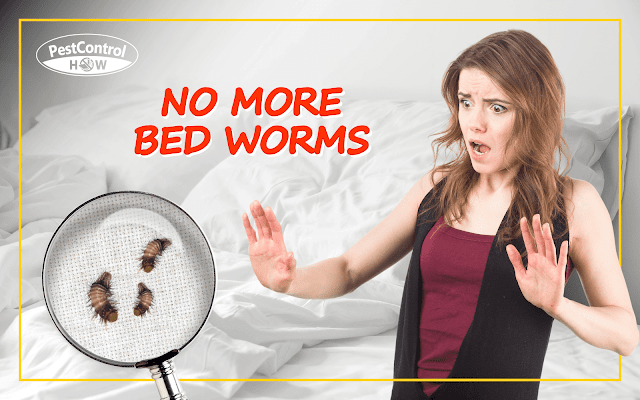 how-to-get-rid-of-bed-worms