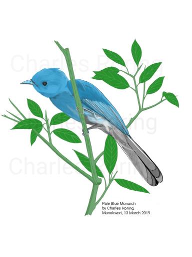 Pale Blue Monarch (Hypothimis puella)