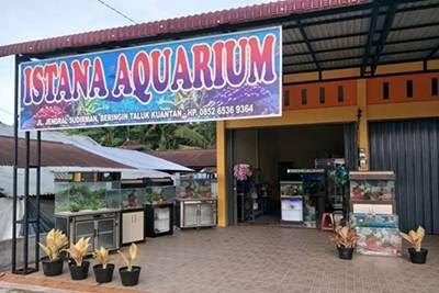 Lowongan Kerja Istana Aquarium Dan Petshop Taluk Kuantan Agustus 2018