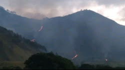 Puluhan Hektar Hutan di Dairi Terbakar, Petugas Jaga Pemukiman Warga