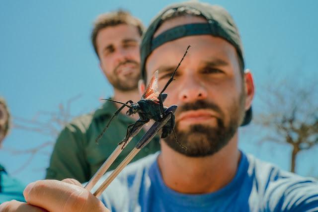 Ataque Animal: na nova série do HISTORY especialistas encaram criaturas venenosas e montam ranking da dor