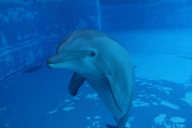 delfini a rimini