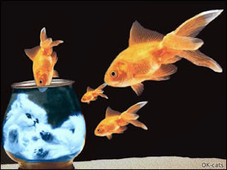 Photoshopped Cat Picture • 4 golden fishes flying in the air watching a kitten chilling under water in his aquarium!