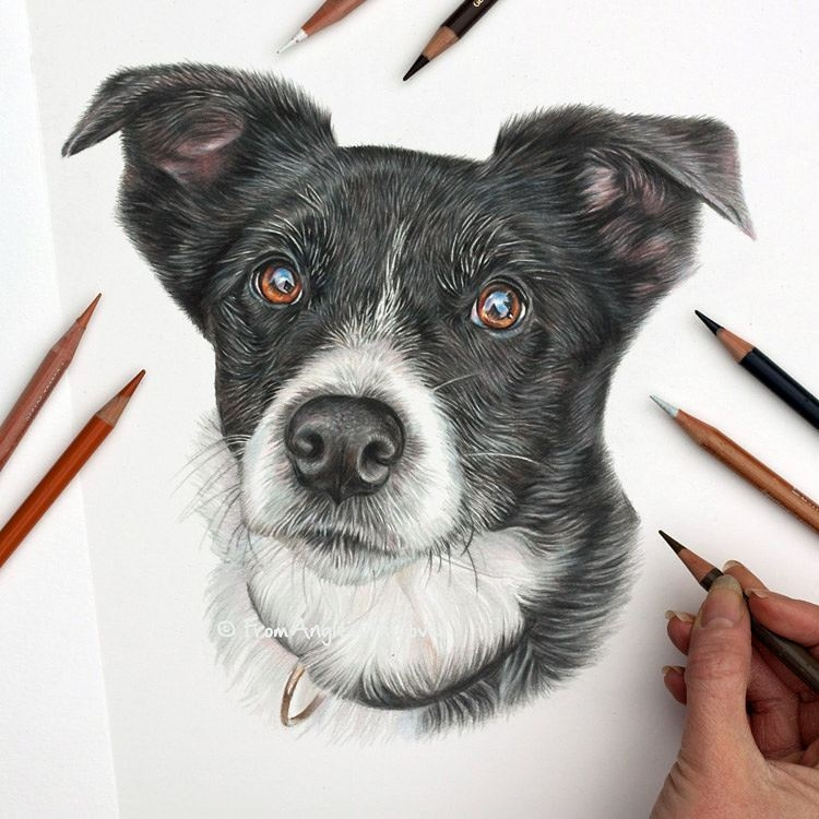 09-Kai-Border-Collie-Angie-A-Pet-and-Wildlife-Pencil-Drawing-Artist-www-designstack-co