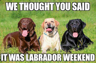 Labrador Dogs confused about Labor Day weekend