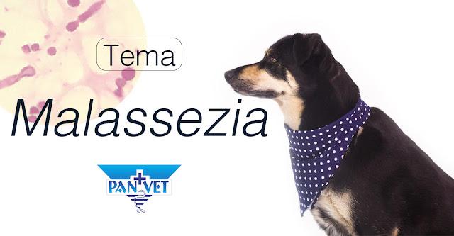 Malassezia kod pasa i mačaka Panvet Subotica