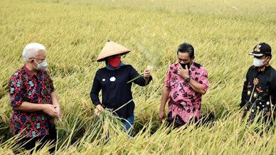 Hadiri Panen Raya Di Kecamatan Sindang, Bupati Nina: Alhamdulillah, Produksi Pertanian Tanam Gadu Ini Menggembirakan