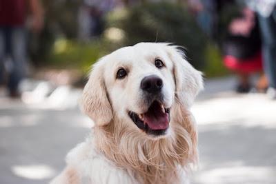 cute dog names male,cute dog names female