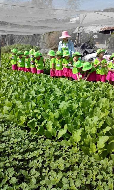 Mô hình giáo dục từ vườn rau hữu cơ HB