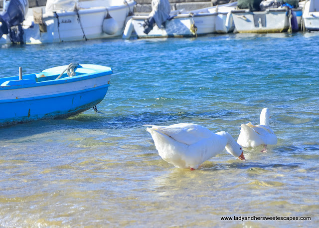 Birds in Mykonos harbour