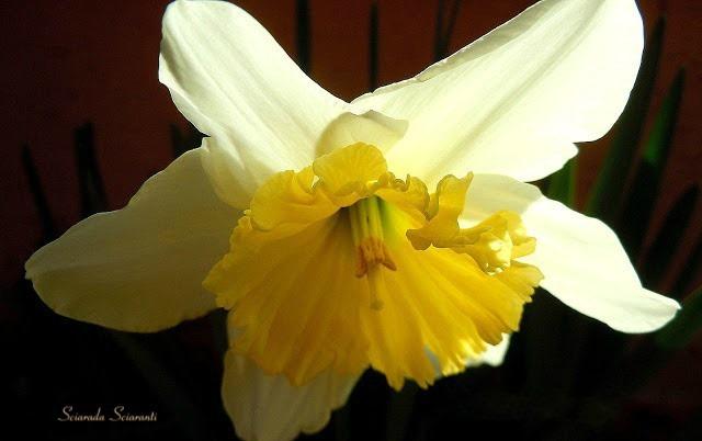Narciso tra ombre e luce