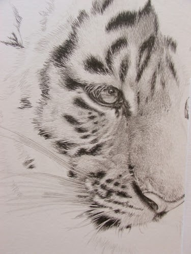 Wildartcapture Julia Ruffles New Tiger Cub Drawing