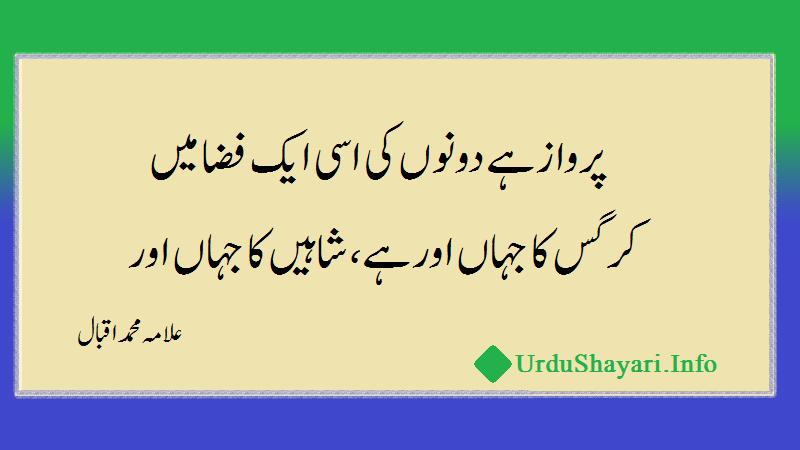 allama iqbal ki shaheen pe shayari - شاہین پہ شعر